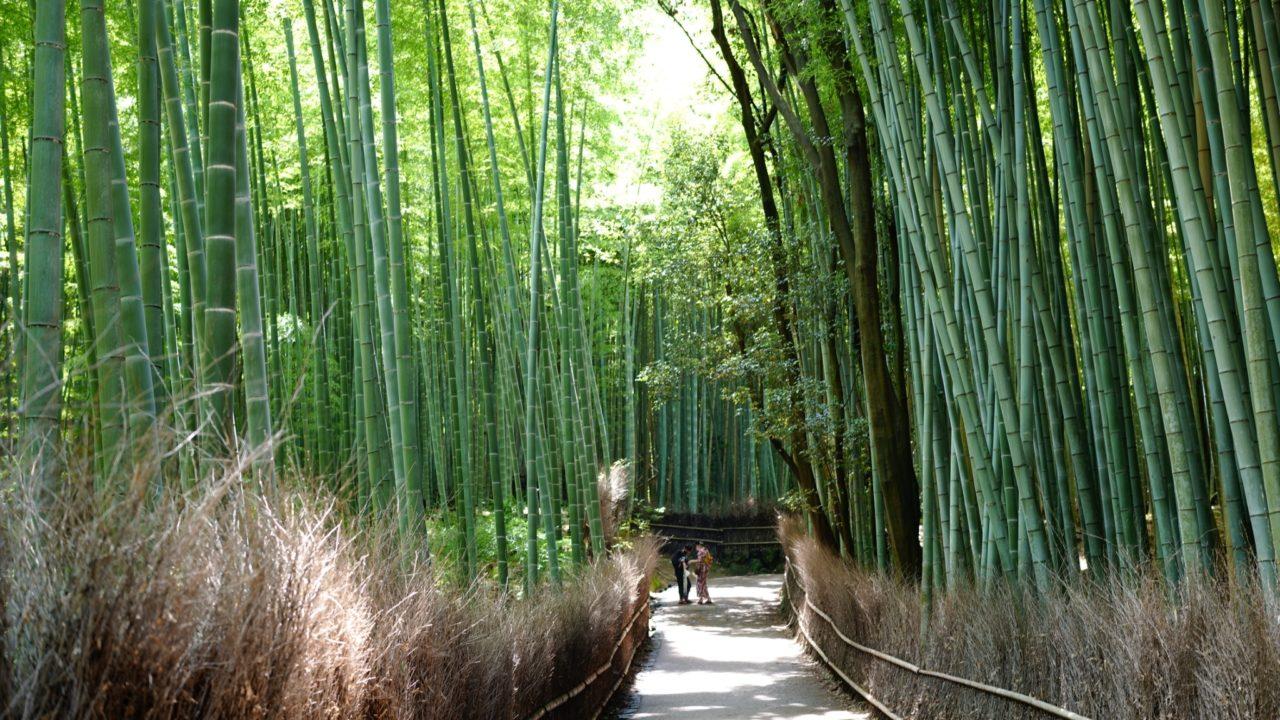 京都 嵐山 竹林の道(kyoto Arashiyama Bamboo Forest)の画像